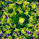 Plentiful Pansies by Michael Rubin