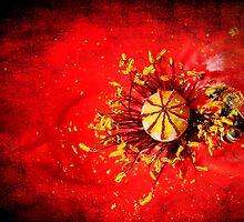 Red lunch in a Poppy by Francesco Malpensi