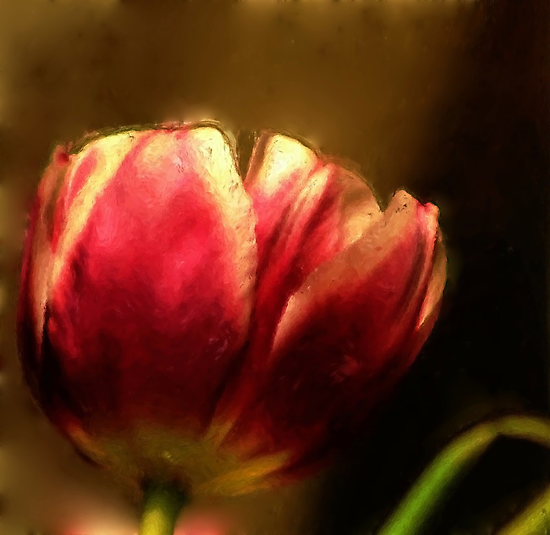*Tulip Painting* by DeeZ (D L Honeycutt)