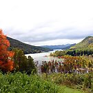 Head of Watauga Lake, Butler, TN,  by Annlynn Ward