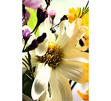 Spring Colors Photographic Print