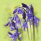 Bluebells by Irina Chuckowree