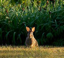 Easter Ears by Robert  Mackert