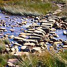 The Stepping Stones by David Davies
