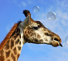Catch a Bubble by Elaine  Manley