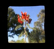 TTV Image ( Through The Viewfinder)#7 by delta58