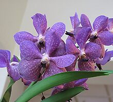 Orchids on Show by Monnie Ryan
