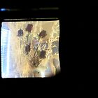 TTV Image ( Through The Viewfinder)# 4 Cards by delta58