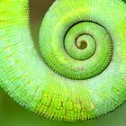 Spiral, Madagascar by Carole-Anne