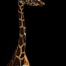 Giraffe by Saija  Lehtonen