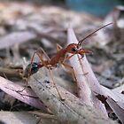 hello bull-ant by wendy lamb
