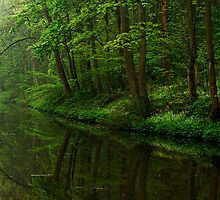 Union Canal - A Tree Lined Way (Colour Version) by Kevin Skinner