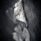 Flutter by Christine  Wilson Photography