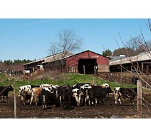 Chow Time on the Farm Photographic Print