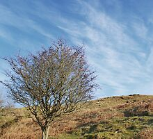 Precipice walk -lone tree by StephenRB