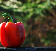 Red Pepper by Marcia Rubin