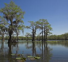 Caddo Lake, Texas by Tamas Bakos