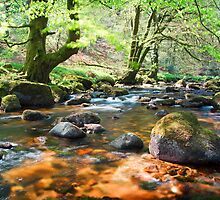 Dartmeet, Devon, England by Giles Clare