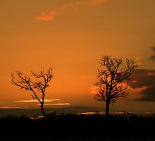 sunburnt trees by fazza