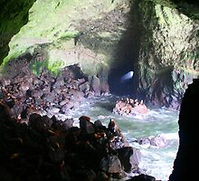 Sea Lion Caves - Florence, OR  by searchlight