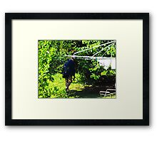 My Beautiful Rain Forest Framed Print