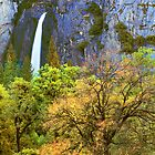 LOWER YOSEMITE FALLS, AUTUMN by Chuck Wickham
