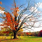 The Gina Tree by Alberto  DeJesus