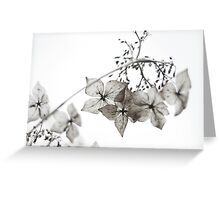 quiet brilliance Greeting Card