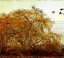 The Willow Tree by Brenda Boisvert