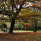 Autumn in the Park by Greg Thomas