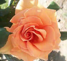 Just Peachy by BingoStar