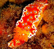 Bright Nudibranch by SerenaB