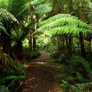 Into the Rain Forest by Kerry  Hill