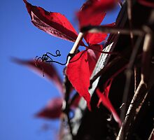 Autumn colour by Adriano Carrideo