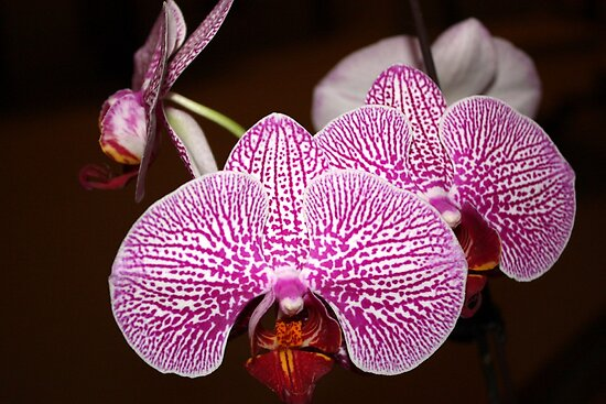 Little Orchids by AuntDot