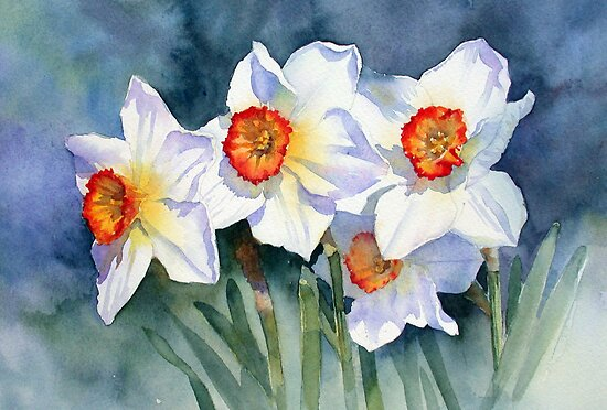 Narcissi in the sun by Ann Mortimer