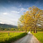 Hyatt Lane in Cade&#x27;s Cove - Smoky Mountains by Dave Allen