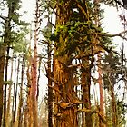 Painted Pines ♥♥♥♥♥ by linmarie