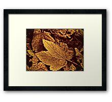 Autumn Warmth  Framed Print