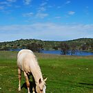 Lovely Meadow by NancyC