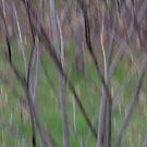 Spring Rain by Lynn Wiles
