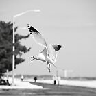 Feeding in Flight by DmitriyM