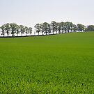 Green Fields by metronomad