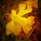 Yellow Daffydil (for sprezzatura) by vigor