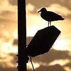 Sea gull by Michael Lucas