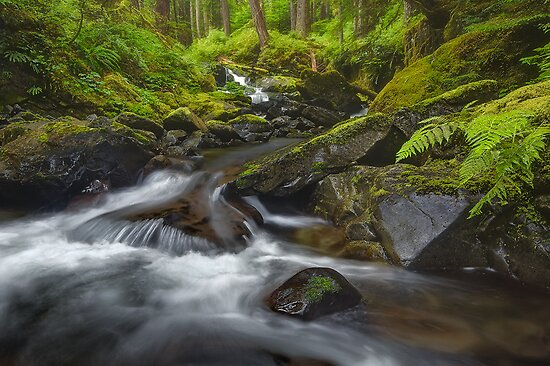 Sol Duc Valley - Olympic National Park by LukeAustin