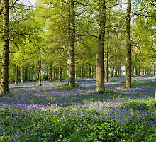 The Bluebell Wood. by BizziLizzy