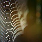 labyrinth by Anthony Mancuso