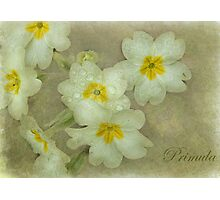 Holding on to Spring Photographic Print
