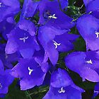 Purple Flowers by artstoreroom